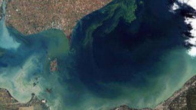 شکوفایی سمی جلبک ها برای پرورش جلبکهای آب شیرین با پتانسيل سوخت زیستی - اخبار زیست فناوری