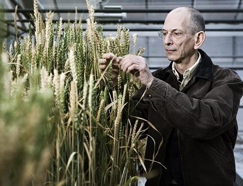 گیاهان Ego محصول کمتری دارند - اخبار زیست فناوری