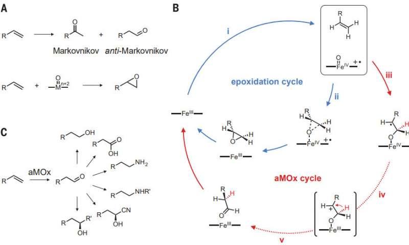 استفاده از آنزیم اصلاح شده برای بهبود اکسیداسیون آلکنها در مارکونیکوف - اخبار زیست فناوری