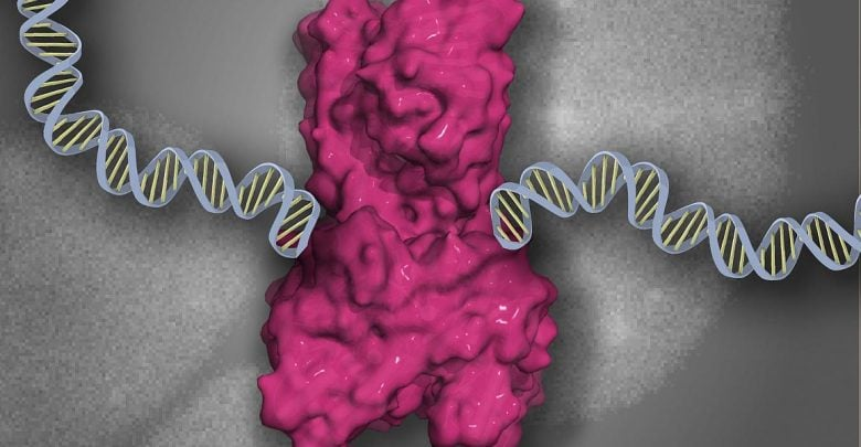 DNA damage caused by cancer treatment reversed by ZATT protein - اخبار زیست فن