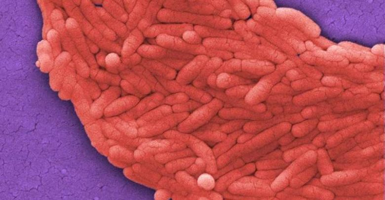 Faster Salmonella test boosts food safety for humans and animals - اخبار زیست فن