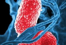 Photo of مبارزه با سرطان کولورکتال با استفاده از پروبیوتیک