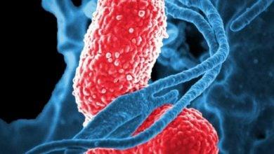 مبارزه با سرطان کولورکتال با استفاده از پروبیوتیک - اخبار زیست فناوری
