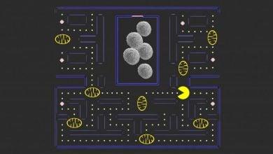چگونگی زنده ماندن سلولهای سرطانی کبدی - اخبار زیست فناوری
