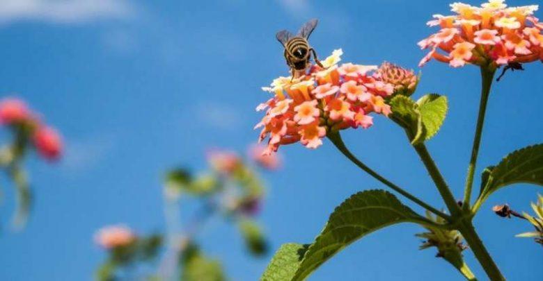 سیگنال مخفی گل به زنبور عسل و دیگر نانوفناوری های شگفت انگیز پنهان در گیاهان - اخبار زیست فناوری
