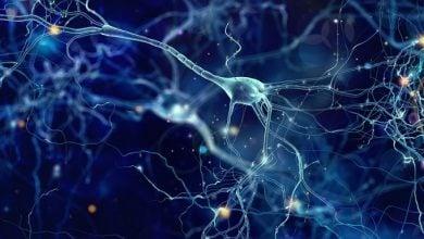 Photo of روشی برای تسریع تمایز سلولهای بنیادی به نورون