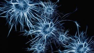 نقش آستروسیتها در ایجاد برخی انواع اوتیسم - اخبار زیست فناوری