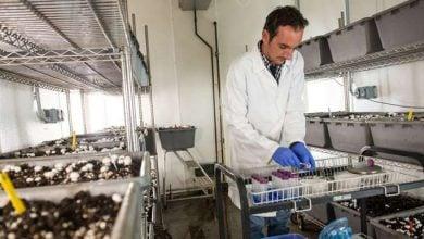 Photo of استفاده از فناوری های پیشرفته و کشف یک جهان تعاملی میکروارگانیسم ها