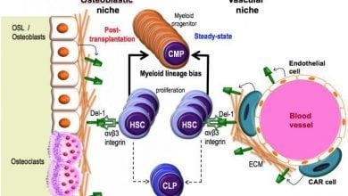 Photo of پروتئین مغز استخوان و بهبود پیوند سلولهای بنیادی
