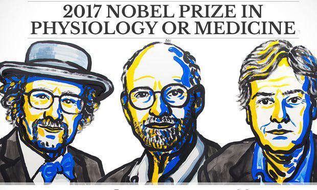 سه دانشمند آمریکایی با تحقیق دربارهی ساعت زیستی درون بدن، جایزه ی نوبل 2017 را از آن خود کردند - اخبار زیست فناوری