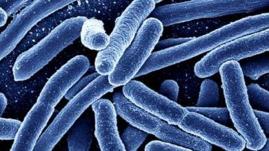 Photo of روش جدید تشخیص باکتری اِ.کلای در آب