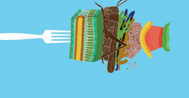 هفت ماده پروتئینی جایگزین گوشت - اخبار زیست فناوری