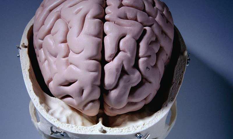 روشی شناختی برای تشخیص زودهنگام آلزایمر - اخبار زیست فناوری