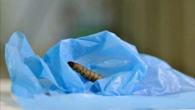Photo of شبهه محققان آلمانی در موضوع کرمهای هضمکننده پلاستیک