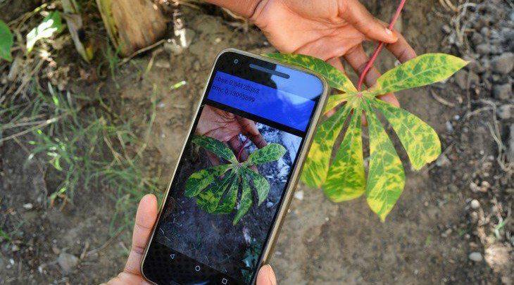 تشخیص بیماریهای گیاهی به کمک اپلیکیشن موبایل - اخبار زیست فناوری