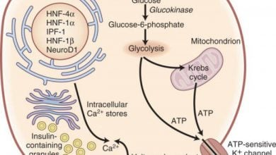 Photo of اهمیت تشخیص «دیابتهای نادر» در مدیریت درمان آنها