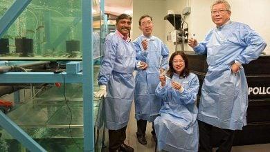 Photo of تکنیکی جدید در پرورش ماهی؛ واکسن خوراکی جدیدی برای ماهیهای پرورشی