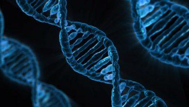 Photo of پروژهای جهانی برای کمک به تشخیص بهتر بیماریهای ارثی و ژنتیکی