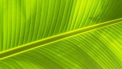 Photo of تغییرات فتوسنتزی گیاهان در نتیجه افزایش کربن دی اکسید