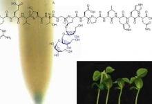 Photo of نقش پپتیدهای سنتتیک در بهبود رشد و نمو گیاهان