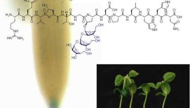 نقش پپتیدهای سنتتیک در بهبود رشد و نمو گیاهان - اخبار زیست فناوری