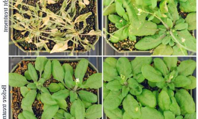 ارتقا تحمل گیاهان به تنش های خشکی و گرما - اخبار زیست فناوری