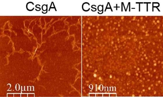 کشف پروتئین مقابله کننده با مقاومت آنتیبیوتیکی – اخبار زیست فناوری