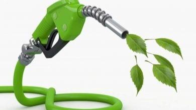 Photo of مطالعه ی کمک جنگلداری به صنعت سوخت زیستی