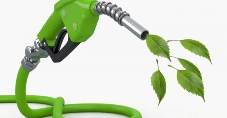 مطالعه ی کمک جنگلداری به صنعت سوخت زیستی - اخبار زیست فناوری