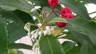 Photo of گیاهان، منبع جدیدی برای درمان موثر آسم