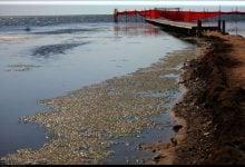 تمیز کردن آلودگی آب های ساحلی - اخبار زیست فناوری
