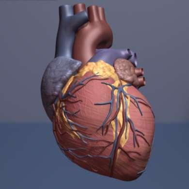 دخالت چربیهای باکتریایی در ایجاد بیماریهای قلبی – اخبار زیست فناوری