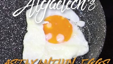 Photo of Algaetech goes international with astaxanthin eggs
