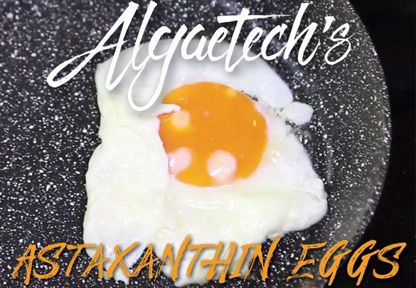 Algaetech goes international with astaxanthin eggs