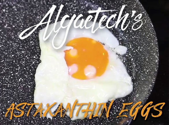 Algaetech goes international with astaxanthin eggs