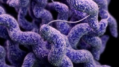 Campylobacter uses other organisms as Trojan horse to infect new hosts - اخبار زیست فناوری