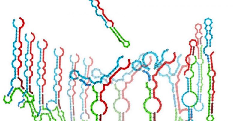 Transposons Stir in Germline, but Small RNAs Still Them