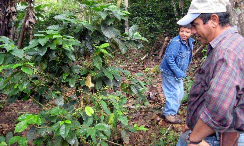 Forest plantations are a potent blend for coffee production - اخبار زیست فن