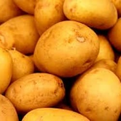 Move Over, Golden Rice — Golden Potatoes Are On The Way! - اخبار زیست فن