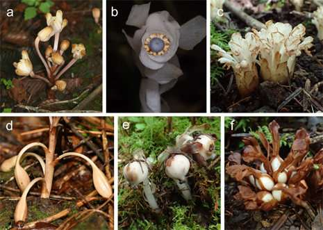 Parasitic plants rely on unusual method to spread their seeds - اخبار زیست فن