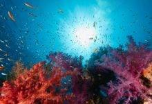 شناسایی سنسور PH مرجان ها - اخبار زیست فناوری