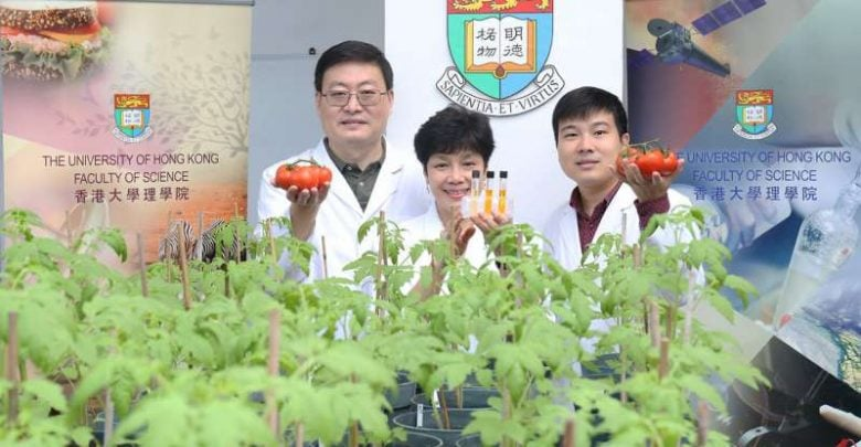 Researchers generate tomatoes with enhanced antioxidant properties by genetic engineering - اخبار زیست فن