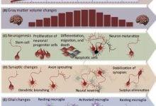 Photo of عملکرد مغز هنگام یادگیری