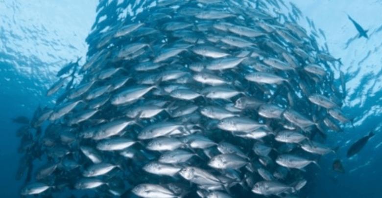 Use of Probiotics in Aquaculture Reduces Antibiotic-Associated Mortality - اخبار زیست فن