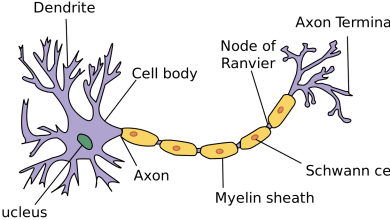 Photo of مکانیزم پاتوژن در بیماری های نورون های حرکتی