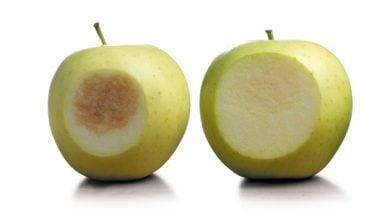 Photo of سیب اصلاح ژنتیکی شده به فروشگاه های ایالت متحده میرسد،اما آیا خریداران میخوردند؟
