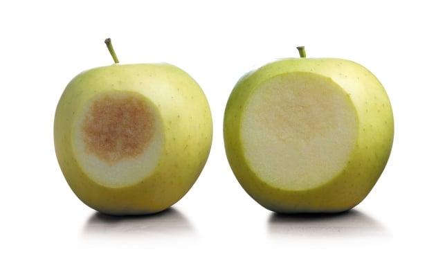 سیب اصلاح ژنتیکی شده به فروشگاه های ایالت متحده میرسد،اما آیا خریداران میخوردند؟ - اخبار زیست فناوری