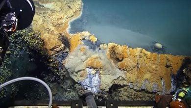 Photo of تولید انرژی با باکتری های آب شور