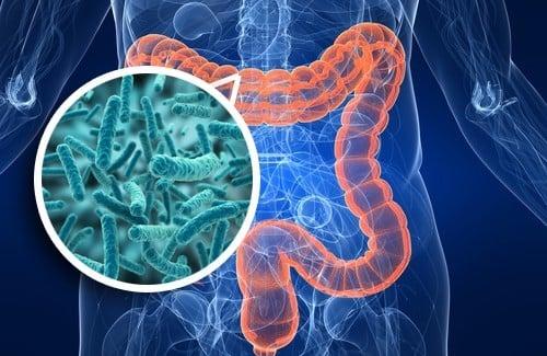 میکروبیوم روده و بینظمیهای سیستم ایمنی – اخبار زیست فناوری