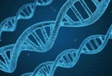 نقش پروتئین BRWD2/PHIP در بیان ژن - اخبار زیست فناوری